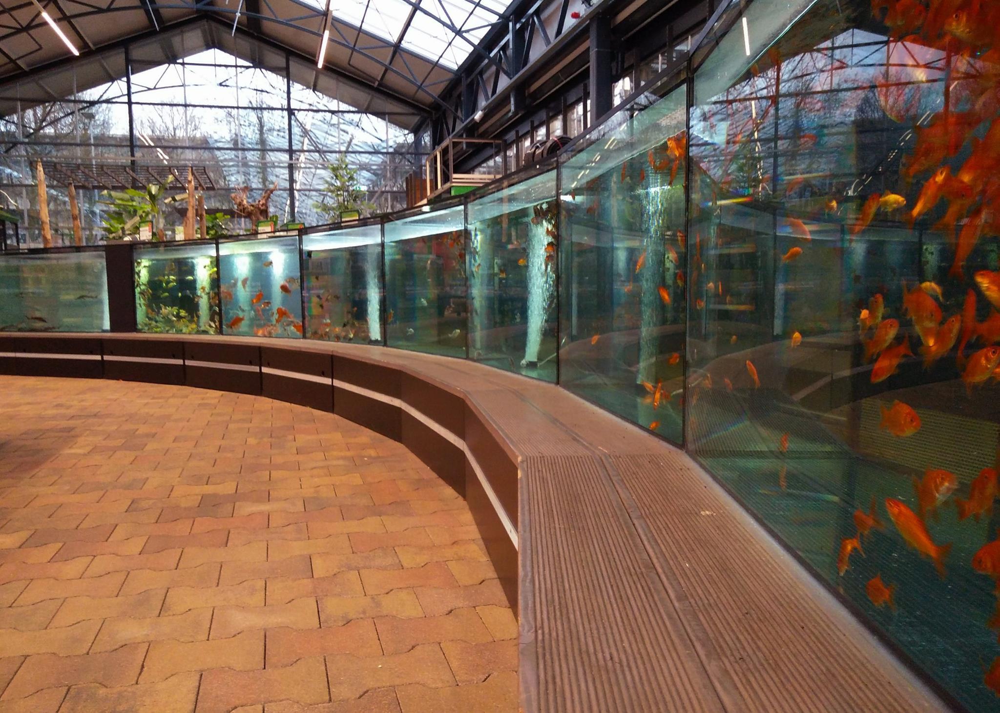 Haal uw vissen in de dierenwinkel van Tuincentrum Leurs nabij Roermond