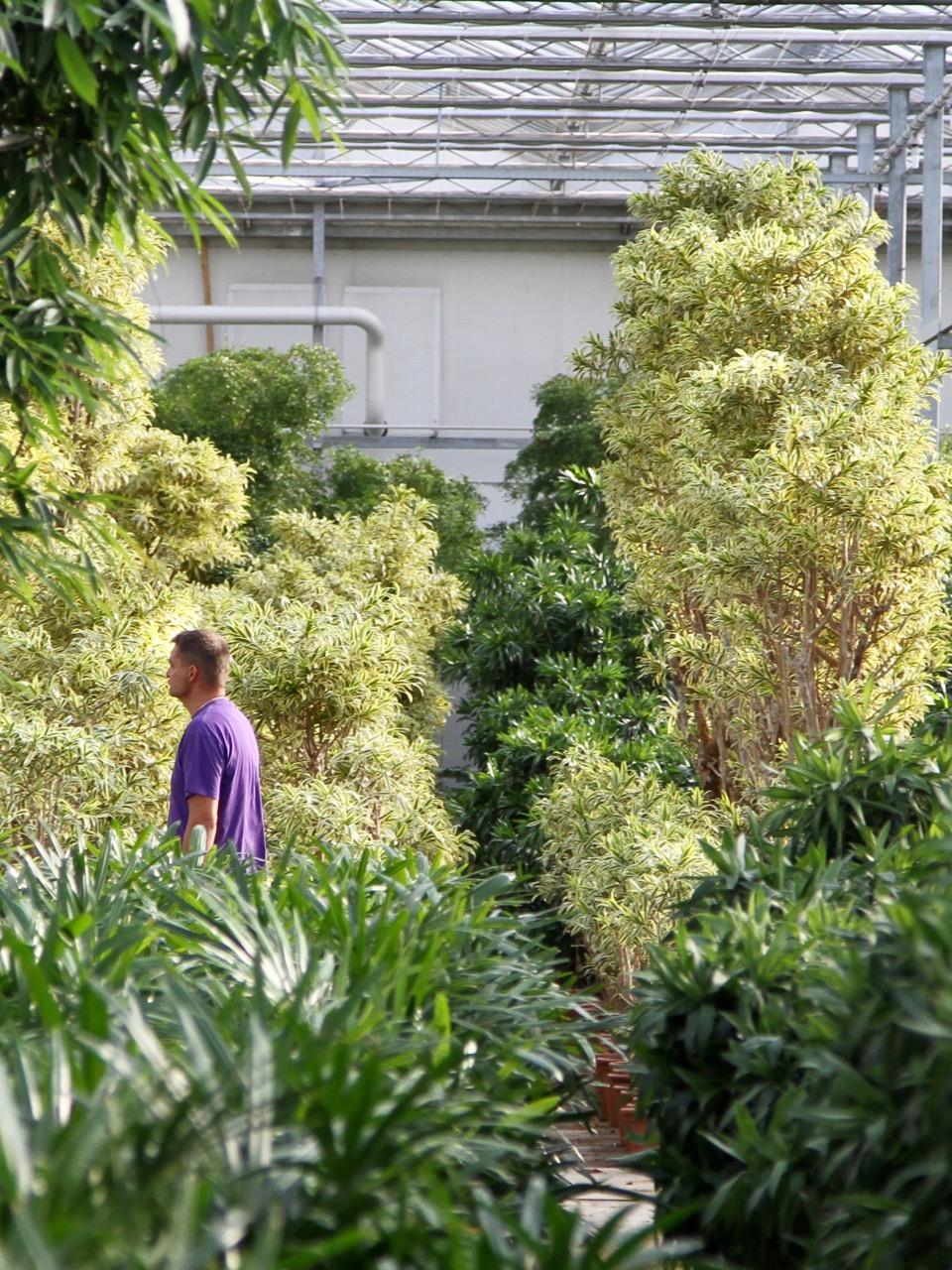 planten bedrijven business tuincentrum Leurs Venlo