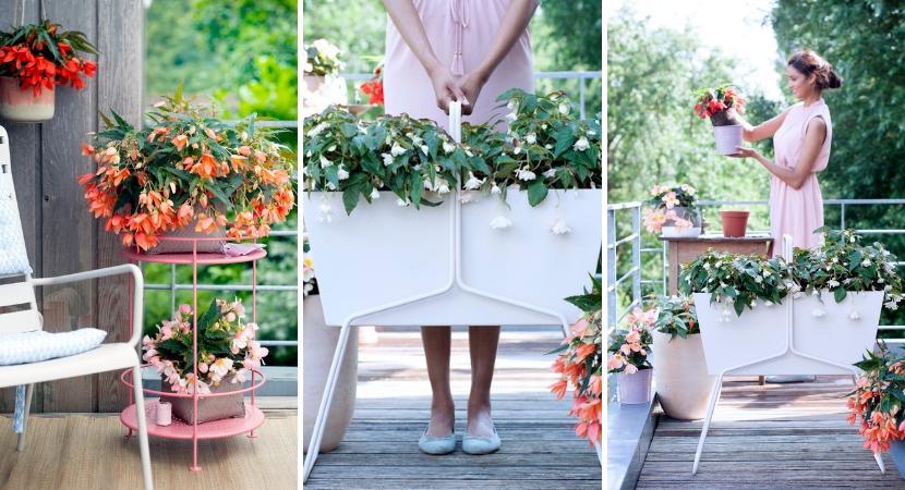 Eenjarige planten_Tuincentrum Leurs
