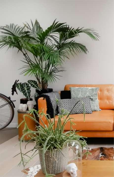 palm-kopen-venlo