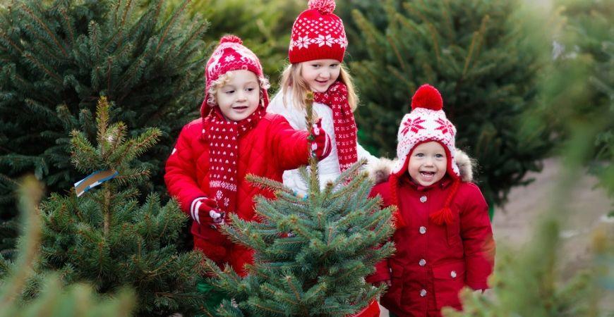 Weihnachtsbaum_Gartencenter Leurs
