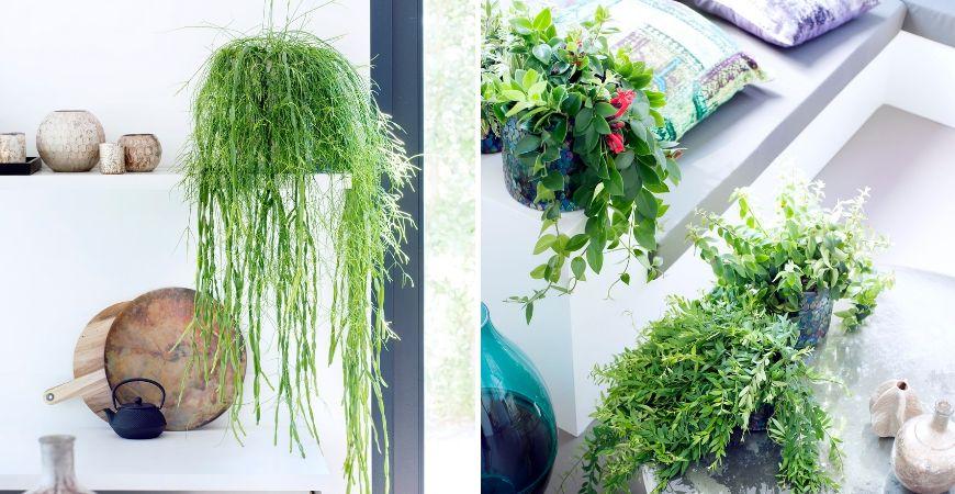 Grüne Zimmerpflanzen_Leurs