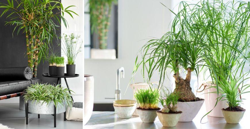 Groene kamerplanten_Tuincentrum Leurs