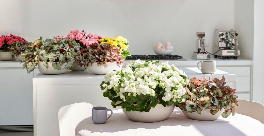 Bloeiende kamerplanten_Tuincentrum Leurs