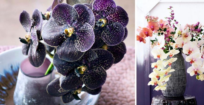 Blühende Zimmerpflanzen_Leurs