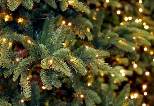 Weihnachtsbeleuchtung_Gartencenter Leurs