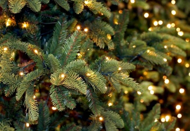 Kerstverlichting_Tuincentrum Leurs