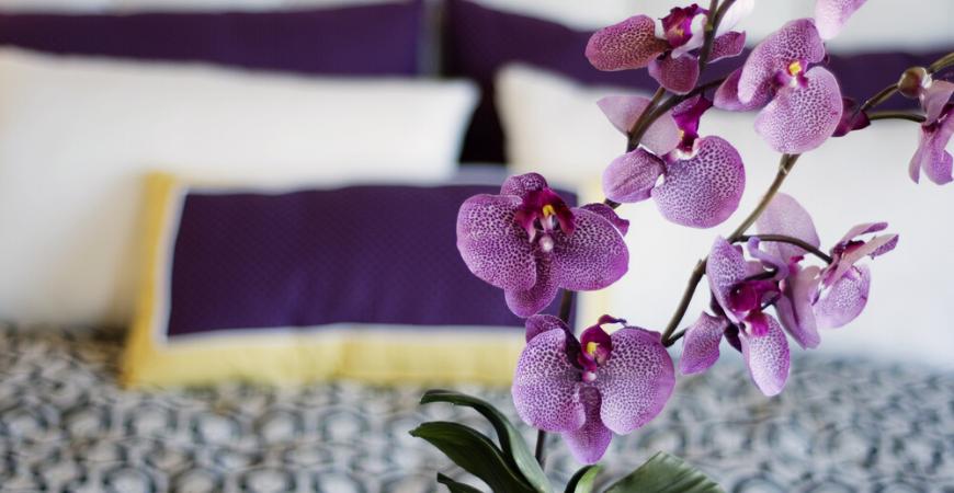 Orchidee - Tuincentrum Leurs