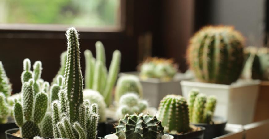 cactus-tuincentrum-leurs-venlo