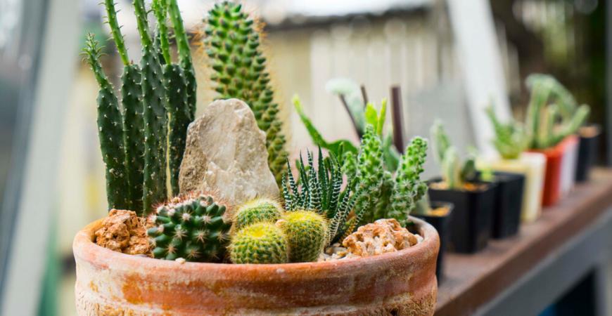 cactus-venlo-leurs