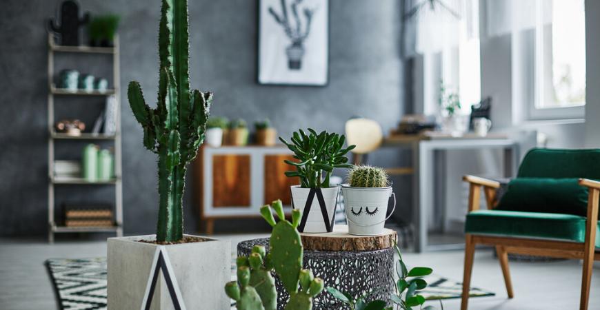 Cactus-kopen-Tuincentrum-Leurs