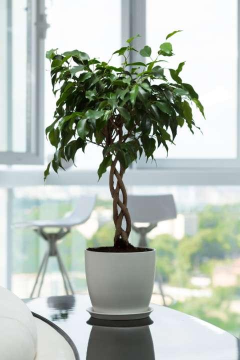 Grote-kamerplanten-kopen-venlo