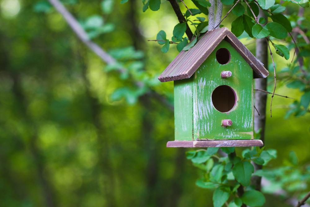 welke-plek-is-het-beste-voor-een-vogelhuisje