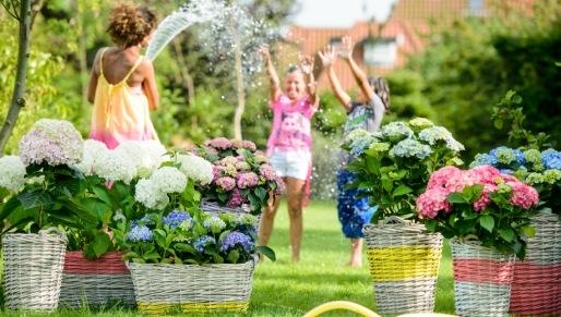Groot assortiment tuinplanten kopen in Venlo bij tuincentrum Leurs