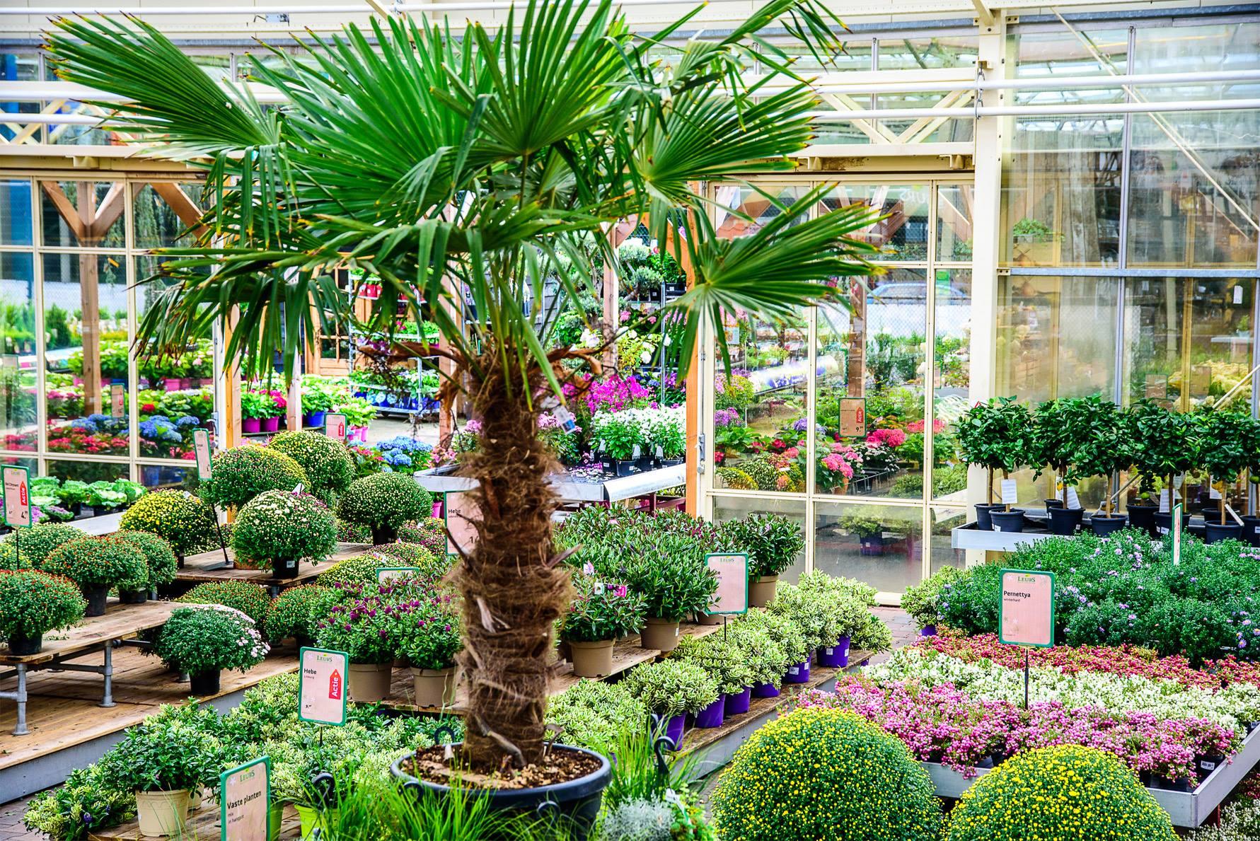 Mooie tuinplanten kopen in Venlo