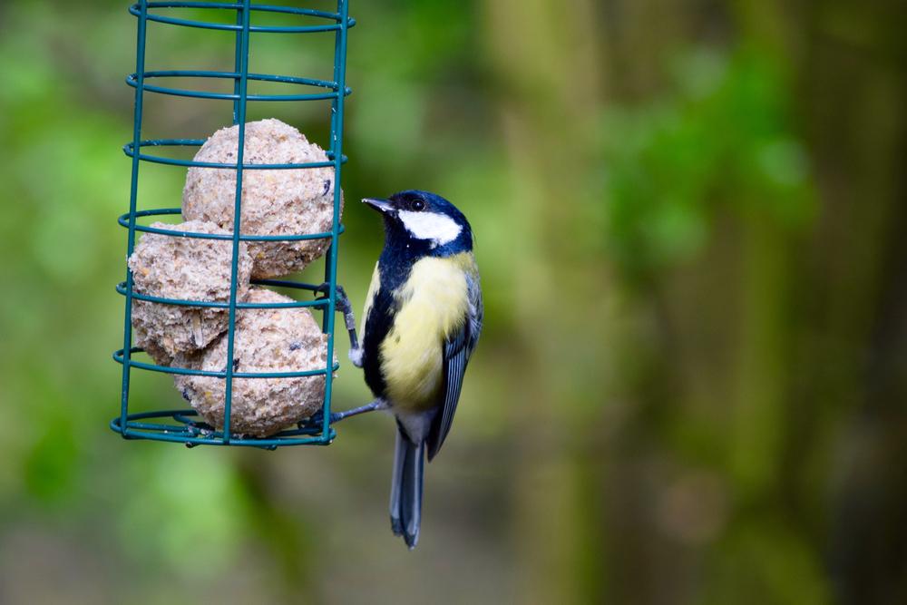 voedsel-vogels