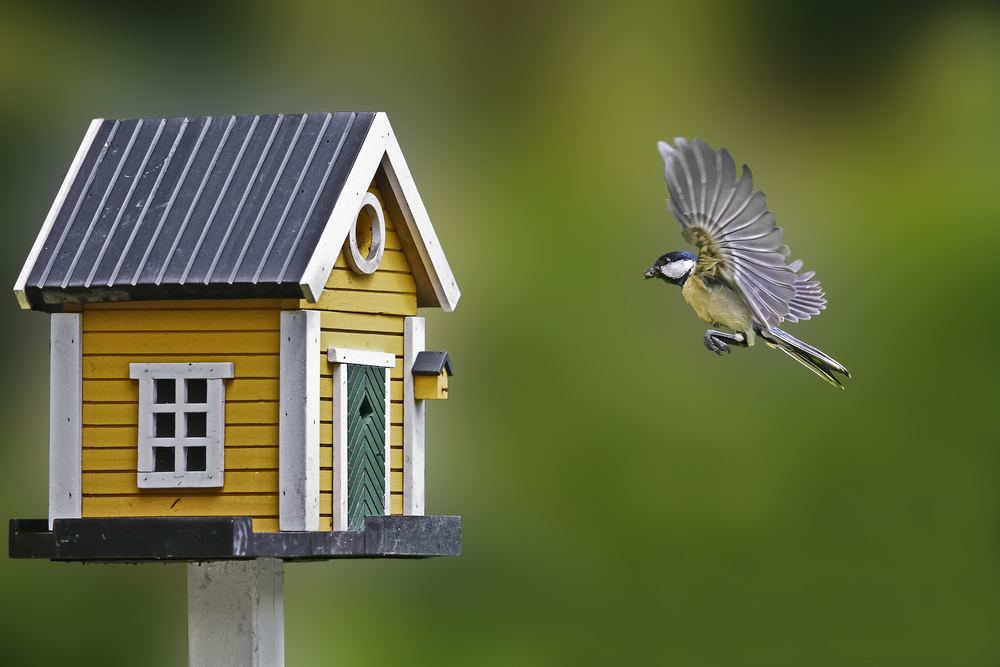 vogelhuisjes-venlo-kopen